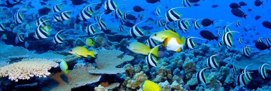 Snorkeling and Diving training in Vietnam 16 days